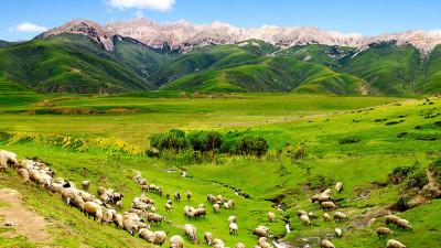 티벳 출사에서...