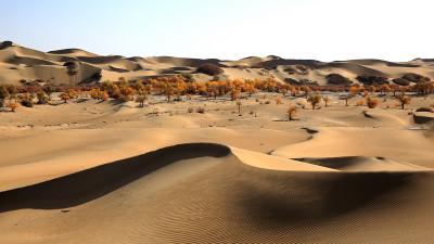중국 타클라마칸 사막의 호양림