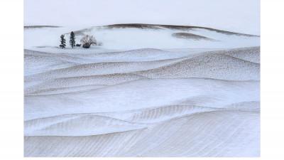 겨울 팔루스